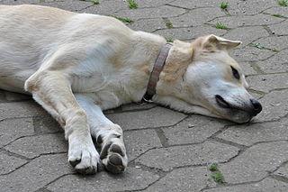 Maphund Bongo