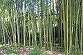 2014 Suchum, Ogród botaniczny (24).jpg
