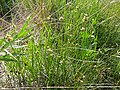 2015.08.22 10.23.40 DSC00180 - Flickr - andrey zharkikh.jpg