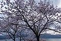 20160402 Amanohashidate 4925 (26513444740).jpg