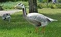 2017-07-04 13-47-39 oiseaux.jpg