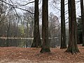 2020-12-12-Hike-to-Rheydt-Palace-and-its-surroundings.-Foto-43.jpg