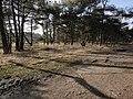 2920 Kalmthout, Belgium - panoramio (11).jpg