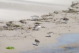 Savage Neck Dunes Natural Area Preserve - Image: 4, VA, USA panoramio (9)