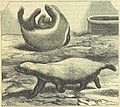 459 of 'Beeton's Historical Romances, Daring Deeds, and Animal Stories. Illustrated, etc' (11246565313).jpg