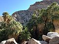 49 Palms Oasis (11003877243).jpg