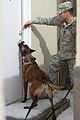 4th MEB units compete for Top Dog honors 150225-A-KX047-001.jpg
