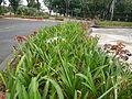 8095jfQuezon Memorial Circle City Monumentfvf 32.JPG
