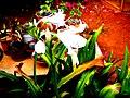 A@a part of Andr. garden - panoramio (12).jpg