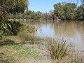 AU-Qld-Nindigully-Moonie River in flood-2021.jpg
