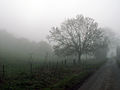 A December view of Woodnook Valley, Little Ponton, Lincolnshire, England 01.JPG