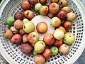 A basket of rotten fruits.jpg