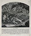 A beaver, tracked down by the dogs on the river banks, is tr Wellcome V0021085.jpg