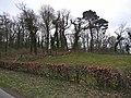 A corner of Cowran Woods - geograph.org.uk - 1237834.jpg