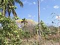 A flora do Pau D'arco Amarelo em Setembro 2008 - panoramio.jpg