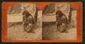 A native Indian of Arizona, by Continent Stereoscopic Company.png