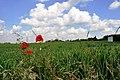 A part of Sonnenschein - panoramio.jpg
