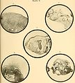 A text-book of diseases of the nose and throat (1907) (14579389047).jpg