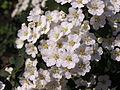 Ab plant 1783.jpg