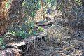 Abandoned trail at Disney's Fort Wilderness (3259817153).jpg
