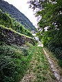 Abschnitt des Kunterswegs beim Hof Puntnofer in Bozen-Leitach.jpg