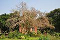 Acharya Jagadish Chandra Bose Indian Botanic Garden - Howrah 2011-01-08 9805.JPG
