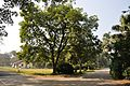Acharya Jagadish Chandra Bose Indian Botanic Garden - Howrah 2011-01-08 9821.JPG