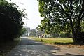 Acharya Jagadish Chandra Bose Indian Botanic Garden - Howrah 2011-01-08 9826.JPG