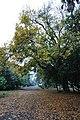 Acharya Jagadish Chandra Bose Indian Botanic Garden - Howrah 2011-02-20 1580.JPG