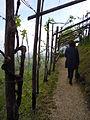 Ai confini del Friuli, a Valdobbiadene, per il Prosecco....jpg
