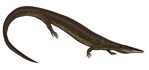 Aigialosaurus - Restoration of A. dalmaticus