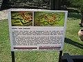 Alba Carolina Fortress 2011 - Map-1.jpg