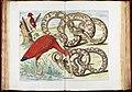 Albertus Seba - Red Ibis, Eudocimus ruber - Google Art Project.jpg