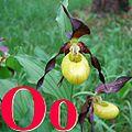 Alfabet roślin - literka O.jpg
