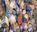 Alfl flint rocks.jpg