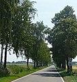Allee - panoramio (11).jpg