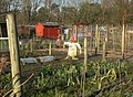 Allotments in winter - geograph.org.uk - 692958.jpg