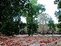 Alsos Park replanting Nicosia Cyprus 2.jpg
