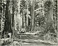 American forestry (1910-1923) (18146006635).jpg