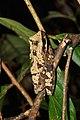 Amphibians (14876548653).jpg