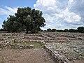 Ancient Olynthos (18759281188).jpg