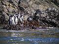 Ancud, Chile (10950487773).jpg