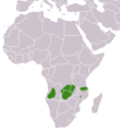 Angolan Genet area.png