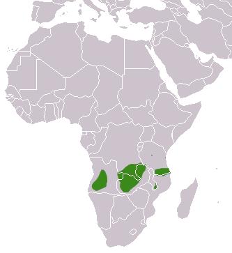 Angolan Genet area