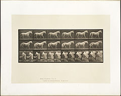Animal locomotion. Plate 576 (Boston Public Library).jpg