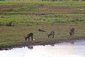 Animals at Pilanesberg National Park 2.jpg