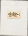 Antennarius marmoratus - 1700-1880 - Print - Iconographia Zoologica - Special Collections University of Amsterdam - UBA01 IZ13600209.tif