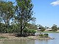 Apex Park, Gatton, waterbirds.jpg