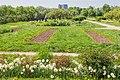 Apothecary garden Аптекарский огород 1.jpg