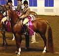 Arabian horse (2669577074).jpg